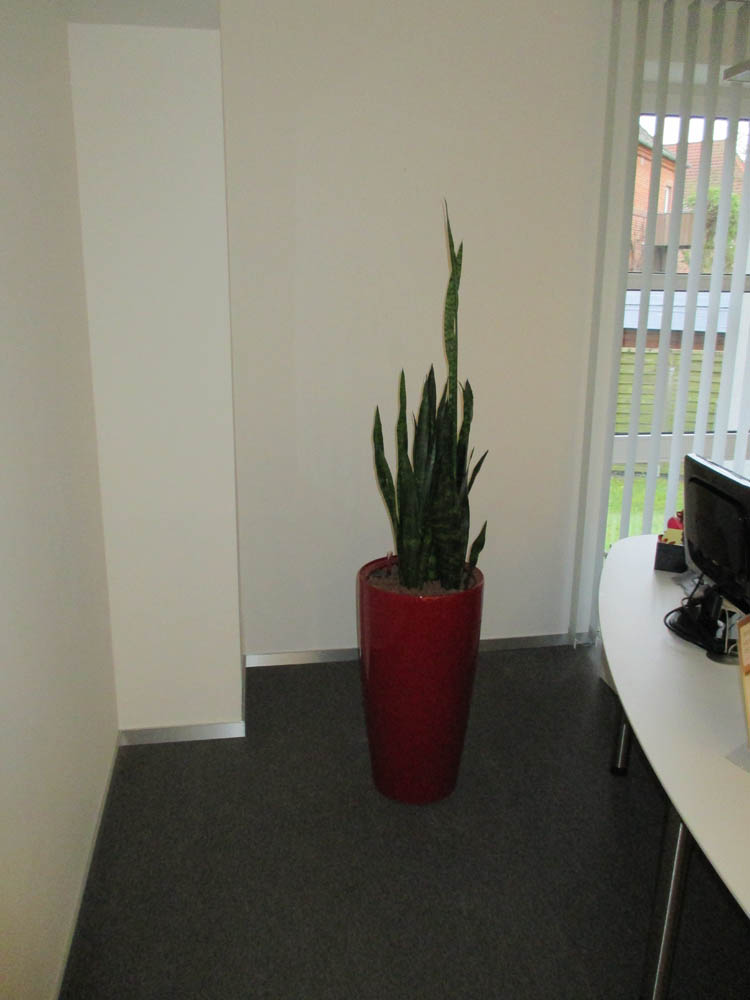 Office-Plants #1