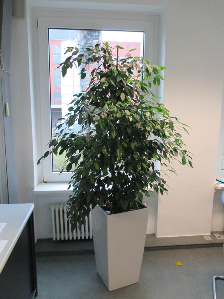 Office-Plants #6