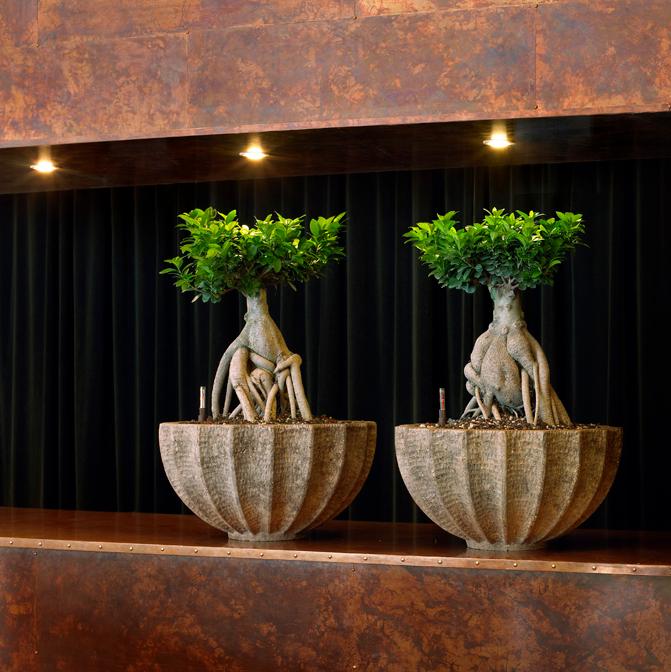 bonsai-als-empfangspflanze
