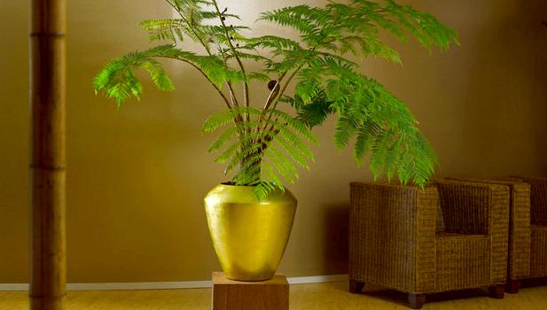 pflanzenschalen-synthetik