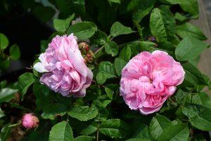 blumen-zentrum-hoppe-floristik