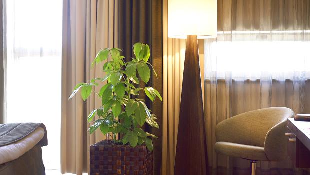 Pflanzen hotel suiten zimmer blumen zentrum for Pflanzen zimmer