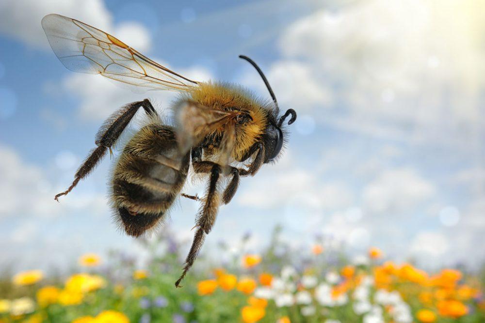 Bienenfreundlich, Bienenwiese, Blühwiese