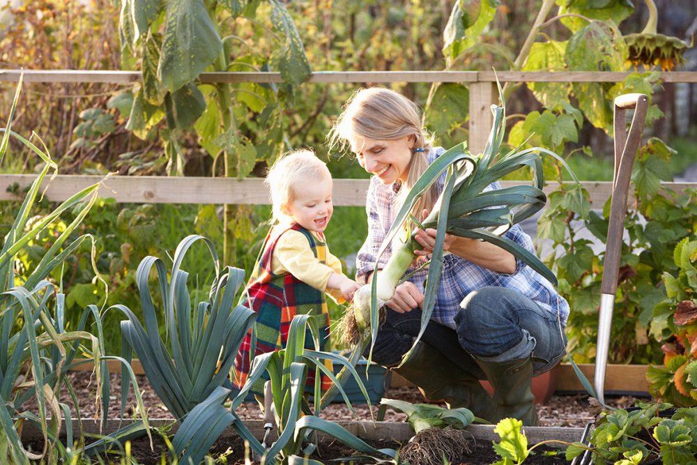 Gemüse ernten, Porree, Gartenarbeit, Gemüsegarten, ernten